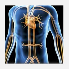 Human cardiovascular system, artwork Tile Coaster