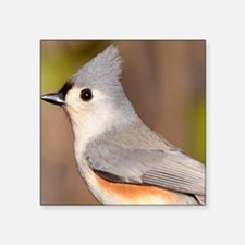 "Tufted Titmouse Tile Coaste Square Sticker 3"" x 3"""