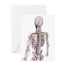 Human anatomy, artwork Greeting Card