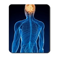 Human nervous system, artwork Mousepad