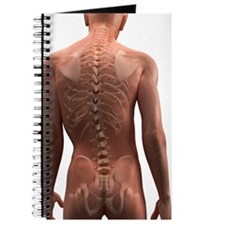Scoliosis of the spine, artwork Journal