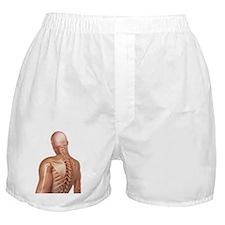 Upper body bones, artwork Boxer Shorts