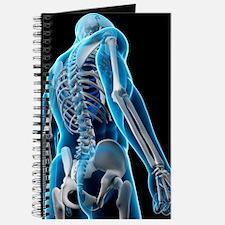 Upper body bones, artwork Journal