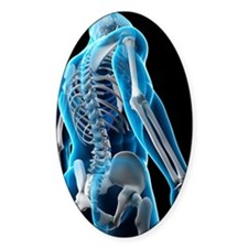 Upper body bones, artwork Decal