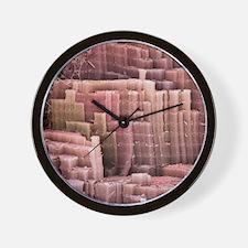 Muscle fibre, SEM Wall Clock