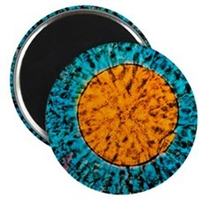 Mature human egg Magnet