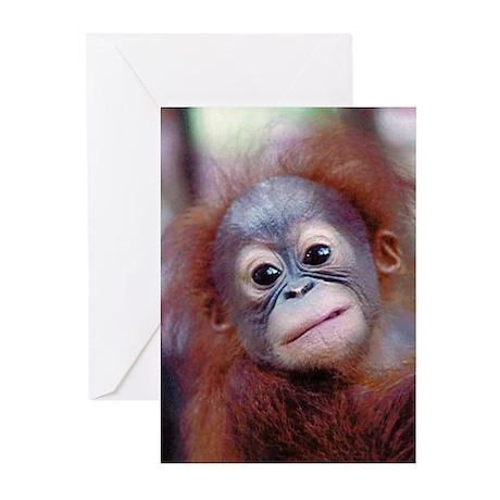 Baby Orangutan Greeting Cards (Pk of 10)