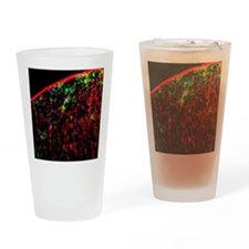 Nerve cell injury response Drinking Glass