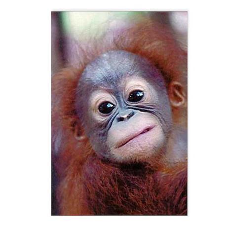 Baby Orangutan Postcards (Package of 8)