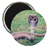 Animal snake 10 Pack