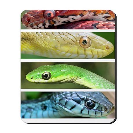 Natures Rainbow Mousepad