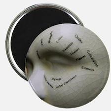 Phrenology head Magnet