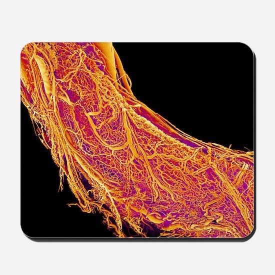Penis blood vessels, SEM Mousepad