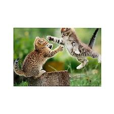 Ninja Kittens Rectangle Magnet