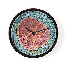 Ovarian follicle, SEM Wall Clock