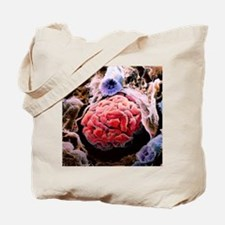 Renal corpuscle of kidney Tote Bag