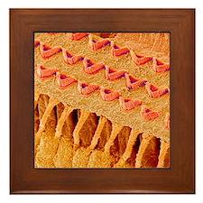 Sensory hair cells in ear, SEM Framed Tile