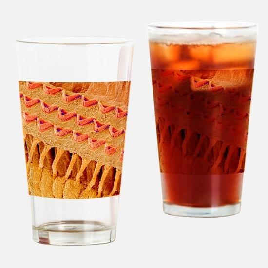 Sensory hair cells in ear, SEM Drinking Glass