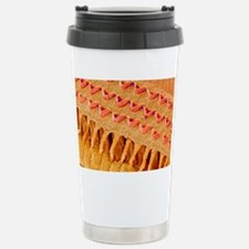 Sensory hair cells in e Travel Mug