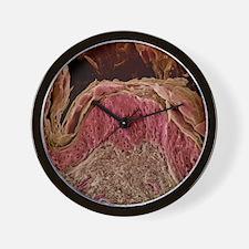 Skin layers, SEM Wall Clock