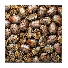 Seeds of the castor oil plant Tile Coaster