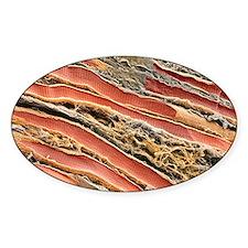 Skeletal muscle fibres, SEM Decal