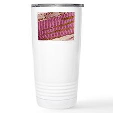 Skeletal muscle fibre,  Travel Mug