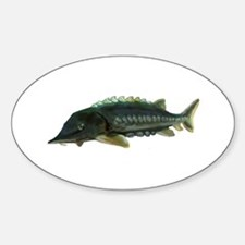 Green Sturgeon Oval Decal