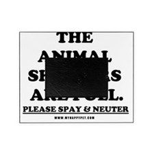 The Animal Shelters are Full! Picture Frame
