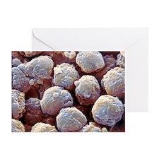Neutrophil white blood cells, SEM Greeting Card