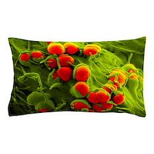 Gonorrhoea bacteria, SEM Pillow Case