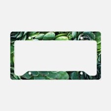 'Hens and chicks' succulents License Plate Holder
