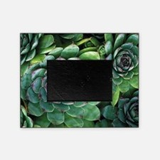 'Hens and chicks' succulents Picture Frame