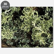 Lichen Puzzle