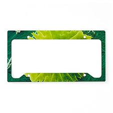 Green alga, Micrasterias License Plate Holder