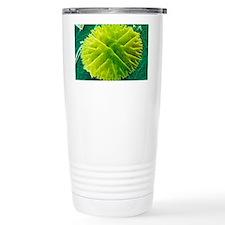 Green alga, Micrasteria Travel Mug