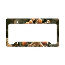 Mould sporangia License Plate Holder