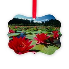 Large water lilies, Nymphaea Ornament