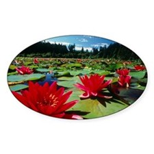 Large water lilies, Nymphaea Decal