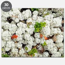 Lichen (Cladonia stellaris) Puzzle