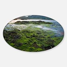 Seaweed Sticker (Oval)