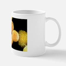 Stem cells, SEM Mug