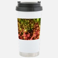Stomach ulcer Stainless Steel Travel Mug