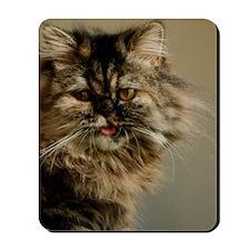 Persian Kitty Mousepad