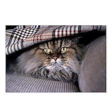 Persian Cat Under Blanket Postcards (Package of 8)