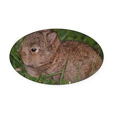 baby Netherland dwarf Oval Car Magnet