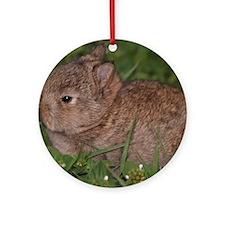 baby Netherland dwarf Round Ornament