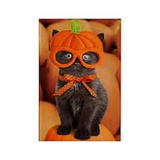 Pumpkin Kitten Rectangle Magnet