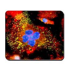 Immunofluorescent LM of active macrophag Mousepad