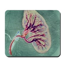 Kidney blood supply Mousepad